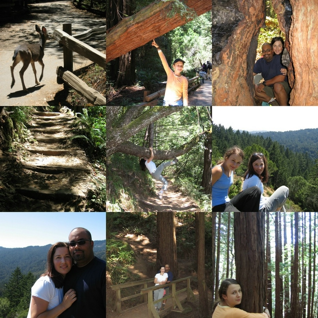 PHOTO SUMMARY - Muir Woods Hike