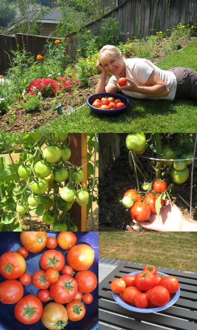 Wanda's tomatoes